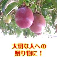 パッションフルーツ【紫極玉】